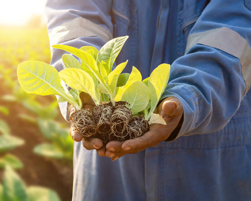 Case Study: Agriculture