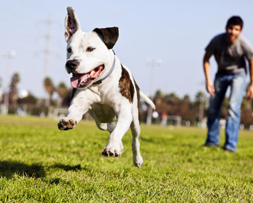 Case Study: Pet Supplies